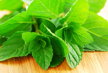 Organic mint beautyikon