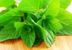 Organic mint beautyikon